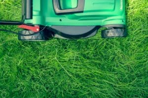 outdoor pests and fence maintenance - lawn mower mowing lawn